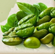 Как молоть зерна зеленого кофе. Зерна зеленого кофе - основа напитка для похудения.